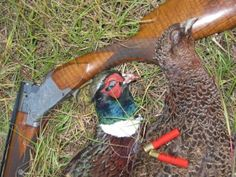 Fall is here Fall Is Here, Browning, Pheasant, Southern Style, Hunting, Guns, Blog, Life, Vintage