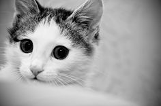Cat by Egor Fedorov on 500px