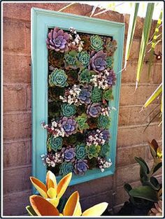 Succulents in a frame - love the color! I have an ugly mirror frame I'll be repurposing for this next year.
