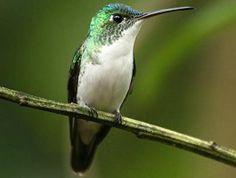 Andean Emerald - Michael Woodruff