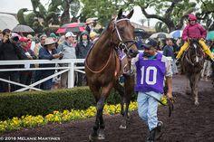 Exaggerator and the Santa Anita Derby in Photos - Runnin' Down A Dream - Horse Racing Nation
