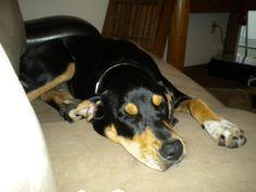 Sleeping Sophia @ One Animal House - Adventures