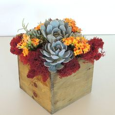 Succulent Arrangement 5 x 5 wood box by SucculentlyUrban on Etsy