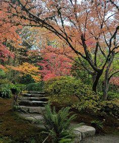 Draped in heavy fogautumn arrives, langorousand turns leaves to gold. Seattle Japanese Garden, Japan Garden, Japanese Gardens, Planting, Gardening, English Garden Design, Spring Decorations, Autumn Scenery, Dream Garden