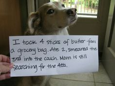 "Cursed Images Discover 20 funny pictures of public dog shaming - Dogtime ""If I dont look into your eyes itll be fine.dont look into the eyes.dont look into the eyes"" Hahahaha :D) Funny Animal Memes, Dog Memes, Cute Funny Animals, Funny Cute, Funny Dogs, Animal Funnies, Funny Memes, Dog Funnies, Friday Funnies"