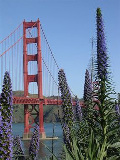 Golden Gate Bridge in San Francisco in spring is breathtaking!