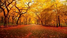 New York Central Park in Autumn nature eco beautiful places landscape travel natura peisaj World's Most Beautiful, Beautiful Places, Beautiful Park, Hello Beautiful, Beautiful Scenery, Absolutely Stunning, Beautiful Landscapes, Tree Tunnel, All Nature