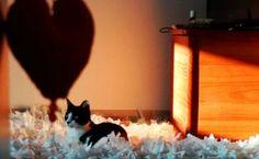 Pequena Mônica e nossos corações!