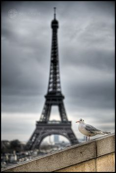 Eiffel Tower I -o by A.G. Photographe, via Flickr