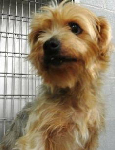 yorkie rescue kentucky 1000 images about found dogs ky on pinterest animal 5718