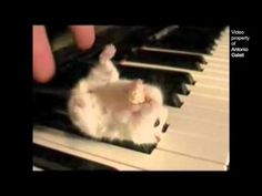 I don't know why I find this so cute. But it is also a little sad. The song just makes it even better!