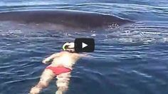 This-Terrified-Whale-Was-Trapped-In-Net-And-Left-To-Die.-How-She-Thanked-Her-Rescuer-Shocked-Me.