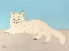 「白い猫」