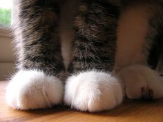 Soft fluffy kitty paws... Awww