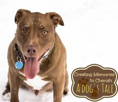 Recipe for Moments: A Day with my owners, Odin's tale #RecipeForMoments