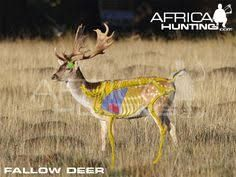 Have you hunted Fallow Deer in Africa? Hunting Clothes, Hunting Stuff, Boar Hunting, Outdoor Survival Gear, Fallow Deer, Call Of The Wild, Archery, Animal Drawings, Kangaroo