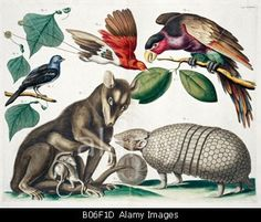 A group of mammals and birds    © The Natural History Museum / Alamy