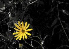 Wildflower Splash - by Paul Sisco
