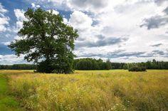 Härligt väder idag! Skönt att jag har semester!  #igsweden #meralink #linköpinglive #linköping #thebestofscandinavia #scandinavia #bestoftheday #bestofscandinavia #ig_captures #igdaily #ig_masterpiece #ig_great_pics #sommar #summer #landskap #iglandscape #landscape_captures #landscapelovers #landscapephotography