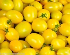 The yellow plum tomato produces clusters of yellow tomatoes about the size of. a plum (appx Perfect on salads. Heirloom Tomato Seeds, Heirloom Tomatoes, Yellow Plums, Lemon Yellow, Varieties Of Tomatoes, Yellow Tomatoes, Strawberry Seed, Tomato Vegetable, Organic Seeds