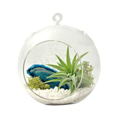We think terrariums are a creative way to invite a small piece of the outdoors to your indoor space. Complete with glass globe, gravel, agate slice, reindeer moss, sea fan, and Tillandsia air ...  Find the Earth and Water Agate Terrarium, as seen in the Mineral Wash Collection at http://dotandbo.com/collections/mineral-wash?utm_source=pinterest&utm_medium=organic&db_sku=SAA0013