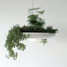 Oświetlenie ogrodowe jest już czymś bardzo powszechnym. Chętnie wyposażamy nasze ogrody w choćby najskromniejsze lampki, aby podkreślać ich walory również po zmroku. Można także mieć mały, oświetlony, a właściwie świecący ogródek we wnętrzu domu. http://www.sztuka-krajobrazu.pl/410/slajdy/ogrod-ndash-projekt-2-w-1