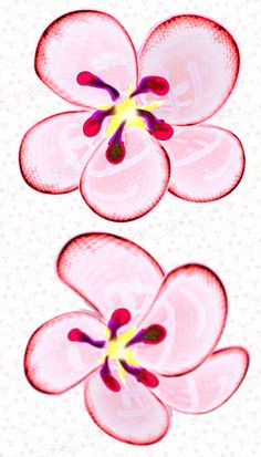 Your place to buy and sell all things handmade Cherry Blossom Vector, Cherry Blossom Flowers, Pink Flowers, Projects For Kids, Art Projects, Scrapbook Borders, Frame Template, Heart Frame, Painted Flowers