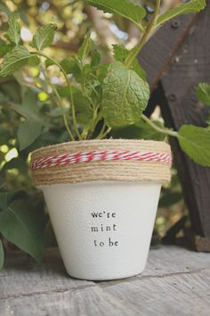 "4"" We're Mint to Be » Mint Herb Indoor and Outdoor Pot or Planter"