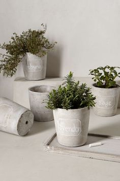Chalkboard Herb Planters #anthroregistry