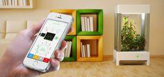 Niwa : une serre connectée qui se contrôle avec votre smartphone