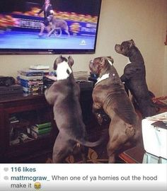 Dogs: looking at Crufts on TV