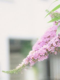 so many fragile things • nf-photo:   Pink flowers  © 2017 Nozomu F.   ...
