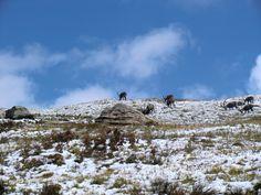Vanoise - Été 2010 - Randonnée vers le refuge des Evettes. #vanoise #hautemaurienne #alpes #montagne #mountain #refugedesevettes #bouquetin