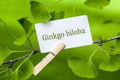 Ginkgo Biloba: Προστατεύει εγκέφαλο και όρχεις από τα βαρέα μέταλλα