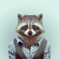 Racoon #classy #design #racoon