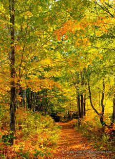 Old Chesterfield Road Trail (New Hampshire) by Jeffrey Newcomer
