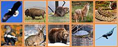 Монтессори-материал. Карточки северо-американских животных