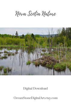 Beaver Dam Beaver Decor Nature Photograph Nova Scotia #beaverdam #beaver #canada #novascotia #canadian #naturephotography #photography #homedecor #customwallart #wallart #printableart #commercialuse