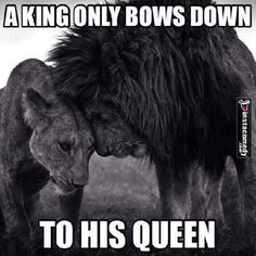 A king only bows down to his queen London Party, Queen Tattoo, Lessons Learned In Life, Majestic Animals, London Wedding, African Beauty, Life Is Beautiful, Best Quotes, Funny Pictures