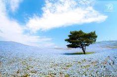 Resultado de imagen para hitachi seaside park japón