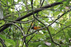 #bird#wildwoodsspaandresort  for information log on to: http: //wildwoodsspa.com