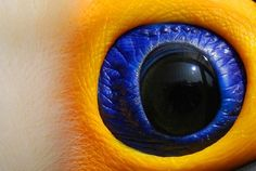 """Eye of the Toucan"", by Robert Taylor.  the zoom on this camera is ridiculous!"