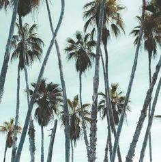 The palmy paradise of Todos Santos >>