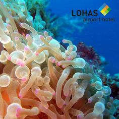 Snorkeling is one of the most popular activities even kids can learn to love. It exposes you to the beauty of nature under the sea.