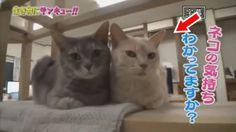トコトン掘り下げ隊!生き物にサンキュー!!ネコの幸せパワーSP! 2017年8月18日