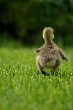Sometimes you just gotta walk away...cute little butt and all ;)