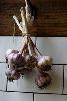 Grown organically on our farm in the Huon Valley, Tasmania. We only use the best quality purple garlic for fermenting.