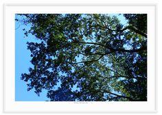 13 - Floresta 2