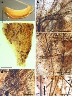 Scientific Reports, Vertebrates, Unique, Museum
