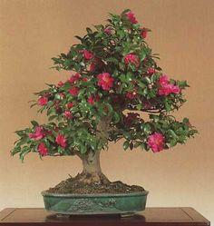 bonsaipots.net - How lovely green ...